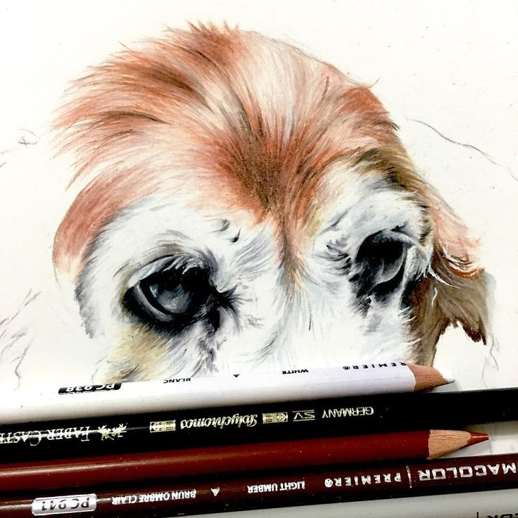 """55 Likes, 1 Comments - @ligengaretha on Instagram: """"LAYERING. #art #coloredpencils #drawing #coloring #prismacolor #commission #petportrait #animalart…"""""""