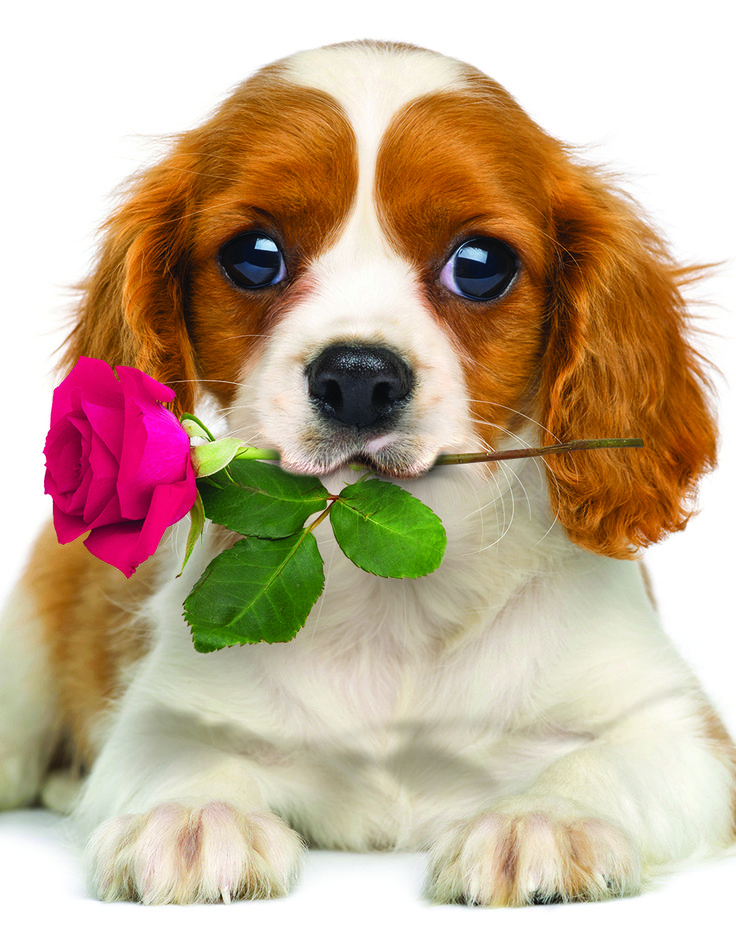 Dog with Rose 100-Piece Mini Puzzle. The perfect gift!