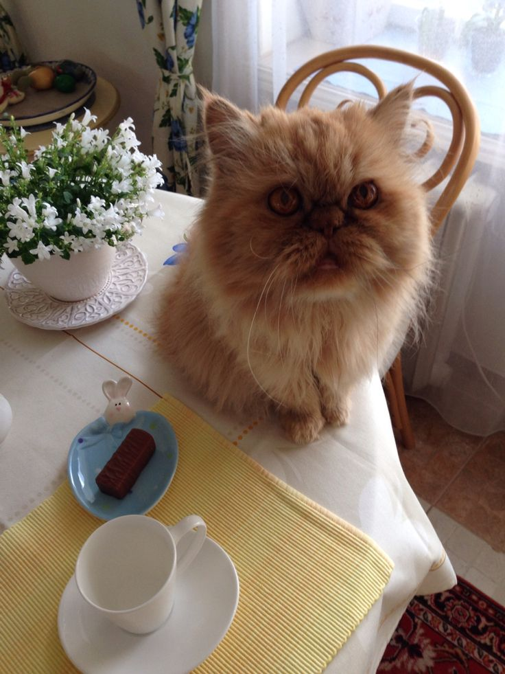 There is my coffee?