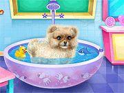 Pomeranian Puppy Day Care