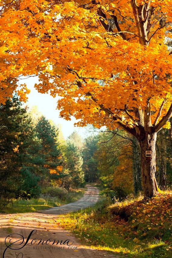 autumn landscape country road thanksgiving autumn fall pinterest