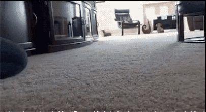 Este perro no debería haber intentado presumir frente a la chica de sus sueños. | 29 Perros que cometieron grandes errores