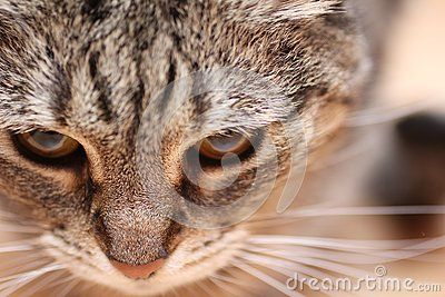 Brown Cats eyes macro shot