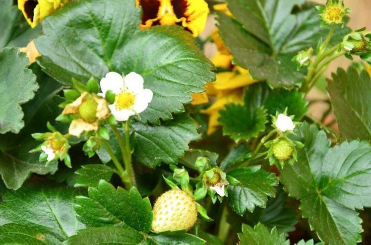 Kwiaty w naszym ogrodzie // #Flowers in our #garden
