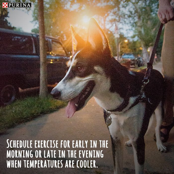 If your worried about your dog overheating in the hot Summer months, we've got a tip for you! Walk your dog in the early mornings or late evenings when the temperature is cooler.