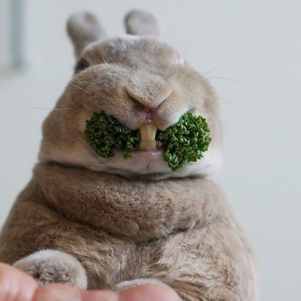 PARSLEY!!!!!!!!!!!!!!!!!!