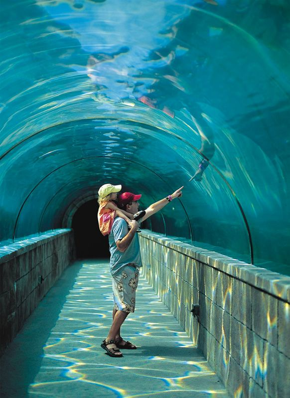 atlantis bahamas | Atlantis Bahamas A Luxury Place For Visit | World Visits