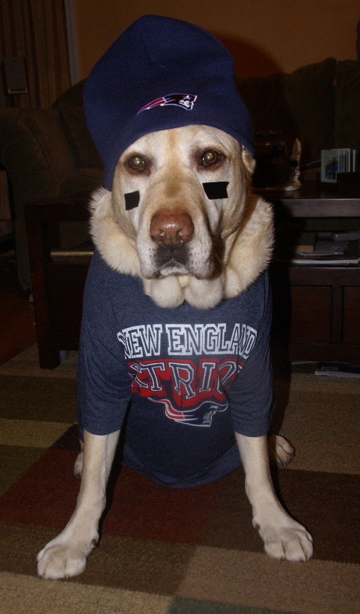 Dog With Fan : Best images about furry fans on pinterest pug pets