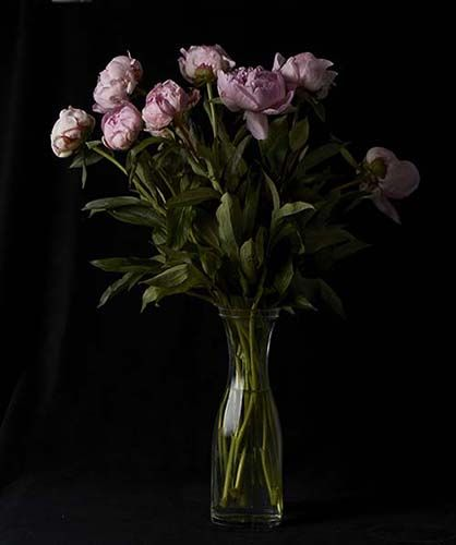 CYRON - PHOTOGRAPHY - ART - FLOWERS