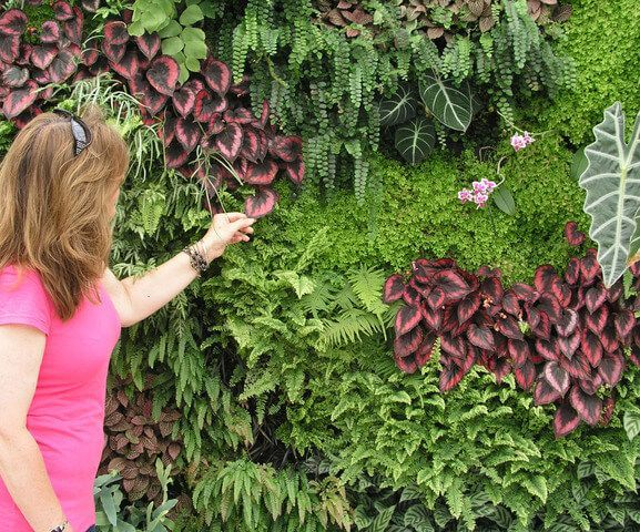 Saiba tudo sobre Jardim Vertical, as espécies para plantar na sombra ou no sol, dicas para fazer seu jardim vertical e ainda 56 fotos de jardins verticais!