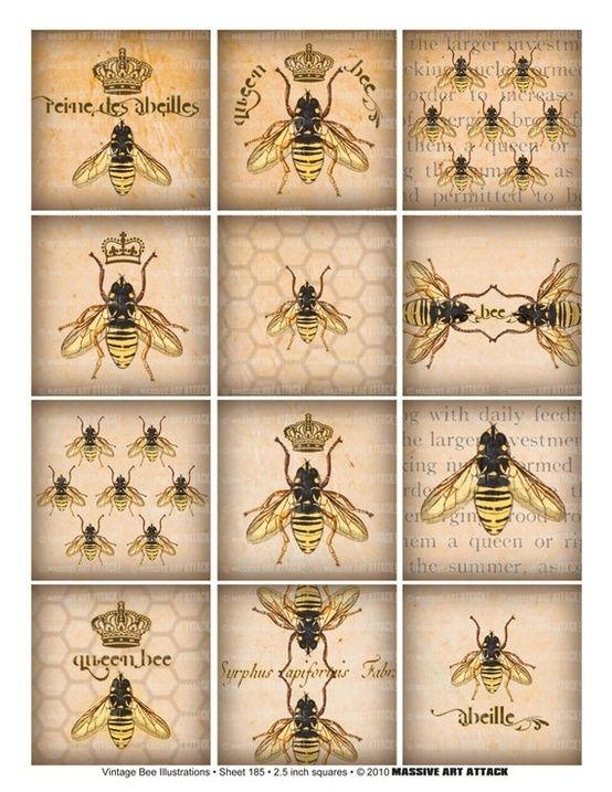 Vintage inspired beekeeping drawings by myra