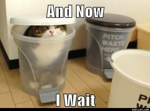 love cats in waiting: Funny Image, The Games, Pet Pictures, Cat Photo, Crazy Cat, Humor, Funny Animal, Kitty, Silly Cat