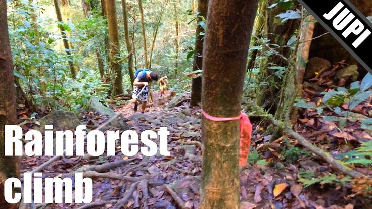Crazy Mountain Climb through Rainforest