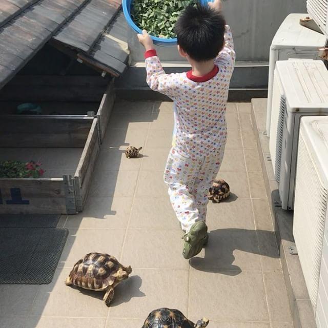 "Eddy Gun (@eddygun) on Instagram: ""My son prefers to feed the tortoises behind the fence... 😂😂😂😂. Happy Weekend everyone #aldabra…"""