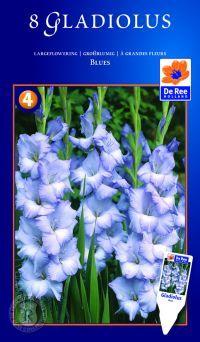 Gladiolus Blues, Gladiolus Blues, Gladiolus, storblomstrende. Planterne har meget lange, sværdformede blade og store farvestrålende, tragtfo...