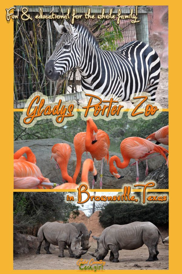 Gladys Porter Zoo in Brownsville, Texas | Best of Gold