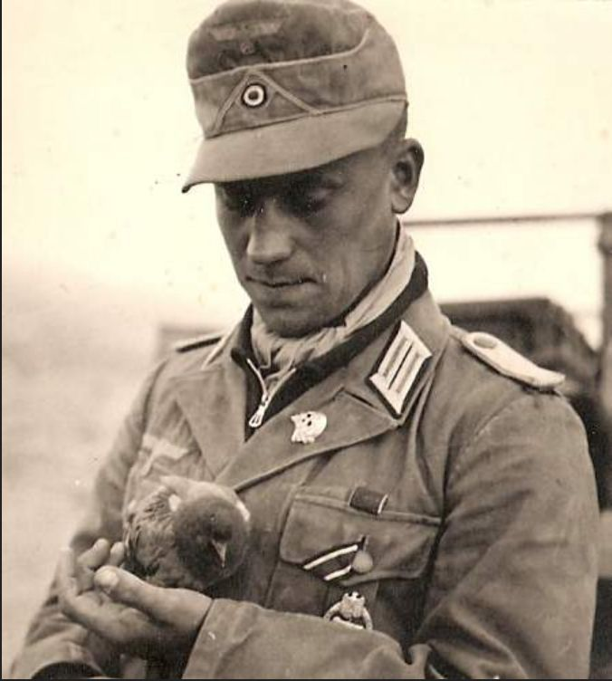 An interesting example of the diversity in German uniform wear. An Afrikakorps officer wearing a tropical tunic with an early SS Jawless skull on his lapel instead of the standard two small panzer skulls seen in this theater of war, his Iron Cross 2nd class ribbon in his pocket button hole instead of the 2nd tunic button hole. Many Afrikakorps soldiers also bleached their field caps white denoting veteran status.