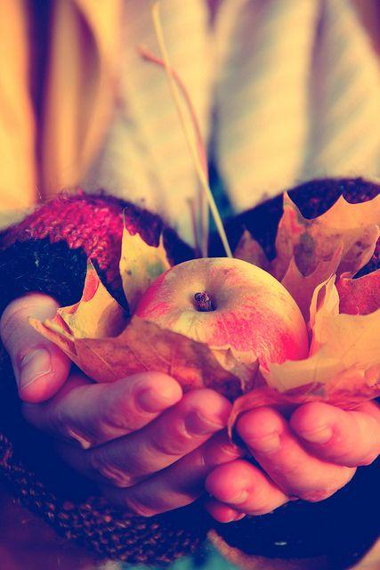 Autumn Fall Leaves September October November