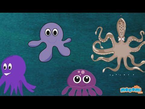 Octopus : Fun Fact Series EP14   Mocomi Kids - YouTube