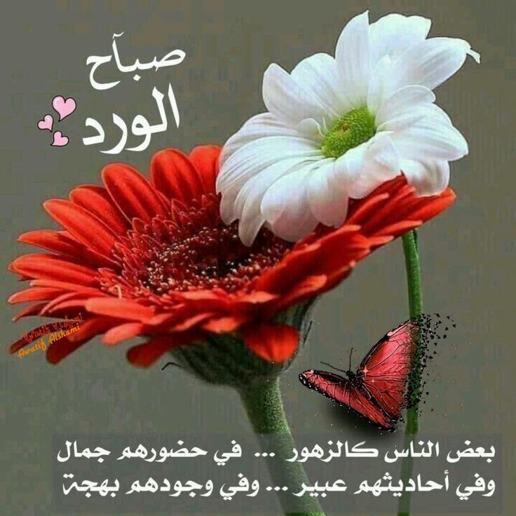 Pin By الصحبة الطيبة On صباحيات Good Morning Cards Good Morning Arabic Good Morning Quotes
