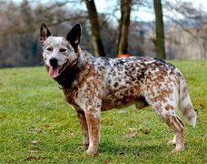 Hunderassen - der-perfekte-hund Webseite!