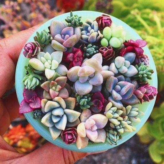 https://sweetsucculents.org/sweet-succulent-optinvvee584m	  Get 100 FREE Succulents! FREE baby cactus!
