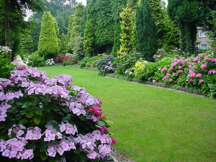 Best plants to choose for a high end look hydrangea for Choosing plants for landscaping
