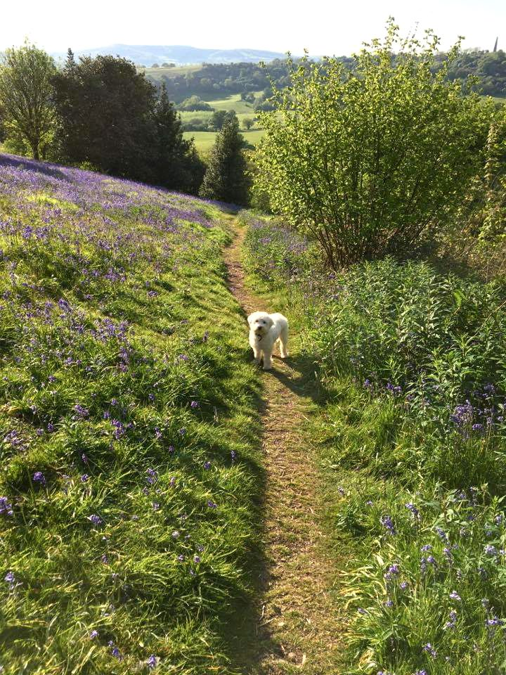 Cosy dog-friendly weekend break / country weekend in Hereforshire at Brooks Country House hotel