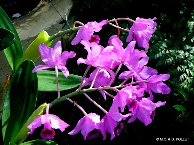 2010 ATHENS GEORGIE, le jardin botanique