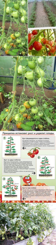 Секреты выращивания томатов (подборка) | Кладовочка идей