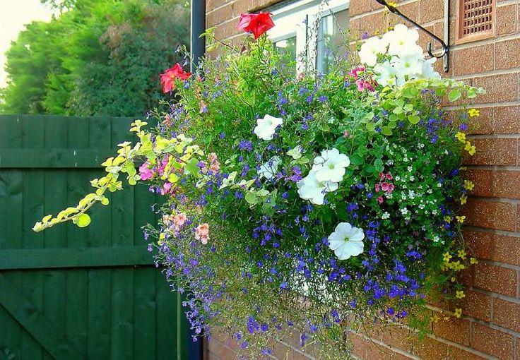 adelaparvu.com despre jardiniere cu flori multicolore, Text Carli Marian (4)