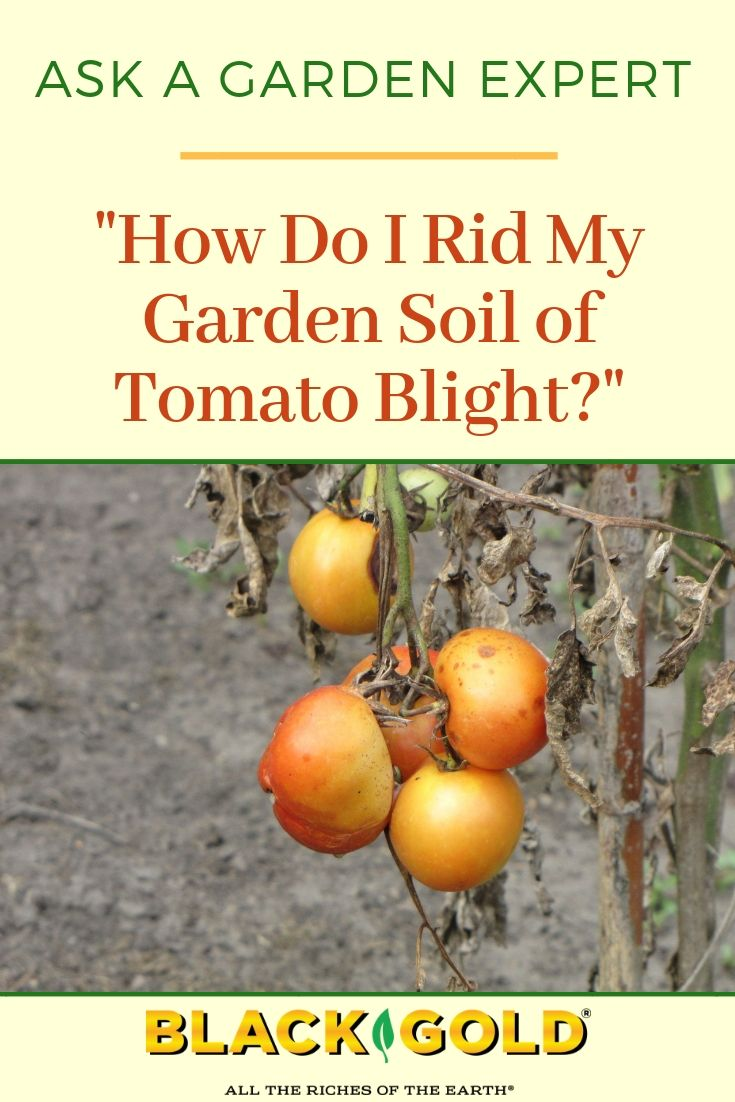 9b8d42a09c9f4b2045cf01baf1ed5f6a - How To Get Rid Of Late Blight On Tomatoes