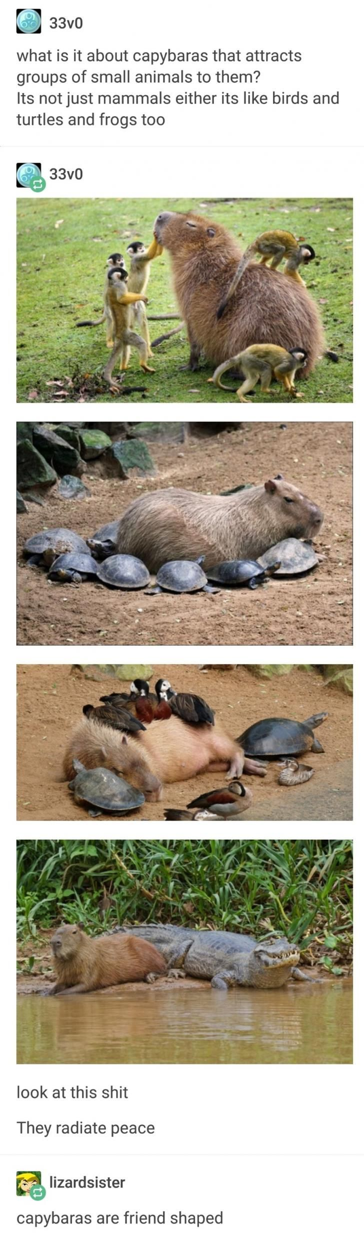 2,890 points • 73 comments - Capybara,the most wholesome animal - IWSMT has amazing images, videos and anectodes to waste your time on