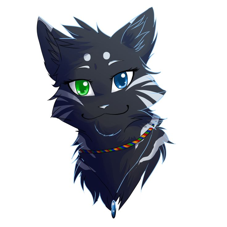 Warrior Cats My Love Story She Cats Only