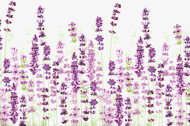Fondo de lavanda, Pintado A Mano De Fondo Floral, Flor Morada Material PNG y PSD