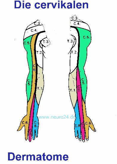 Rückenschmerzen Reflexe und Dermatome