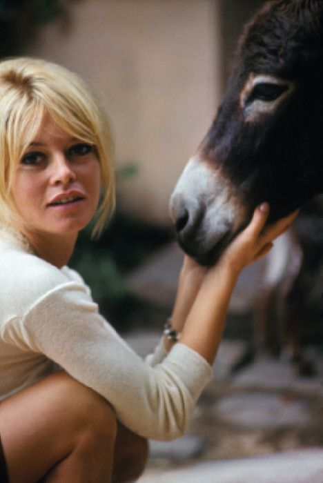 """I gave my beauty and my youth to men. I am going to give my wisdom and experience to animals."" -Brigitte Bardot"