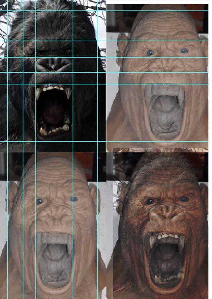34 best Monkey/Gorilla images on Pinterest | Mono, Monos y Anatomía