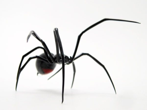 Black Widow Spider -Both males and females have strong venoms, but females have venom which is thrice as deadly compared to males URL: http://wolfspider.org/