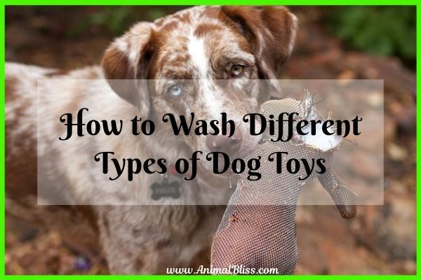 How To Wash Different Types Of Dog Toys Different Types Of Dogs