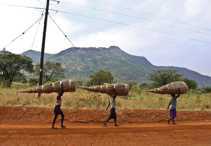 everydayafrica:  A file of women carry a harvest of grass for sale in Abim district, northern Uganda-January 2016  Photo by @edward_echwalu  Edward Echwalu  #Photojournalism #Uganda #AbimUganda #PhotojournalismInUganda #Everydayafrica #everydayeverywhere #Abim   Landscape, northern Ugandalandscape