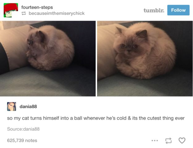 And this perfect sphere of fur. | 19 Tumblr Posts That Prove Cats Are Actually Perfect