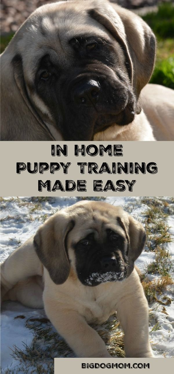 Puppy training just got easier with Raising Your Puppy, an online course designed for busy pet parents who want to train their puppy at home.  Puppy Training / Puppy Training Tips / Raising A Puppy / Training A Puppy  #Sponsored #RaisingPuppy