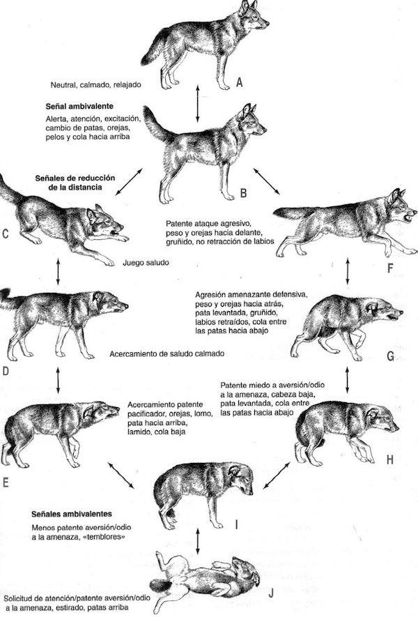 Expresiones sociales en el perro
