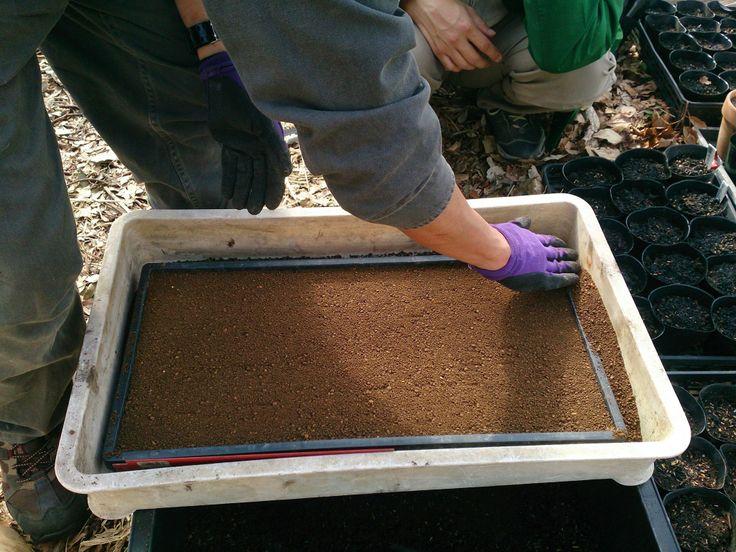 140404稲種おろし(苗箱編)覆土、ここで再度、土が均一になるよう調整