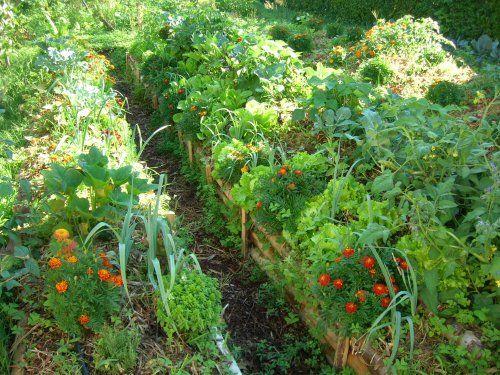 jardinage sur buttes de cultures permanentes