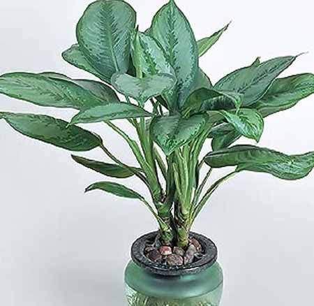 15 tanaman hias pembersih udara dalam ruangan. Tanaman hias umumnya ditanam di luar ruangan. Namun ternyata ada juga tanaman hias yang dapat ditanam di dalam ruangan. Bukan sekedar sebagai penghias…