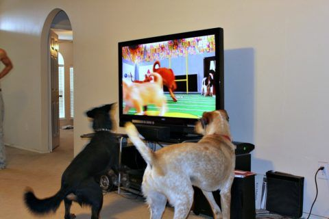Superbowl/Puppy Bowl - Before, during & after the Superbowl, I watch Animal Planet's Puppy Bowl - with my dog. Here's how to host a party for dogs, kids & adults during the Puppy Bowl.