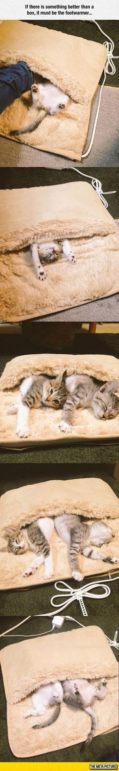 These kittens are enjoying the supreme warmth of a footwarmer, courtesy their loving papa.