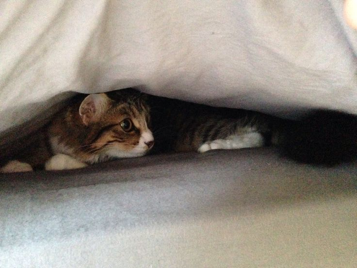Under the covers.